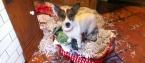 pethelpers_ireland_animal_rescue