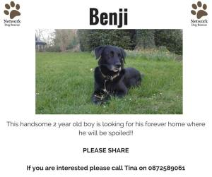 Benji is looking for his comfy sofa