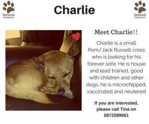 Charlie is searching for his forever family